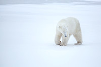 20151109 CS-CS-DS-AH in Churchill - JPG HiRes -9406