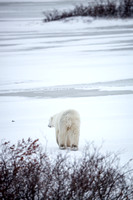 20151109 CS-CS-DS-AH in Churchill - JPG HiRes -9396