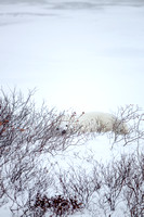 20151109 CS-CS-DS-AH in Churchill - JPG HiRes -9365