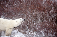20151109 CS-CS-DS-AH in Churchill - JPG HiRes -9468